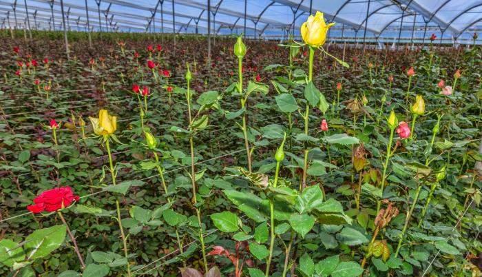 Agronomía: Cursos de Floricultura y Jardinería